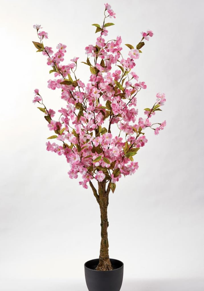 You Can Plant Your Own Cherry Blossom Tree For Just 39 From Home Depot