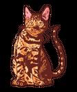 Bengal Cat Image