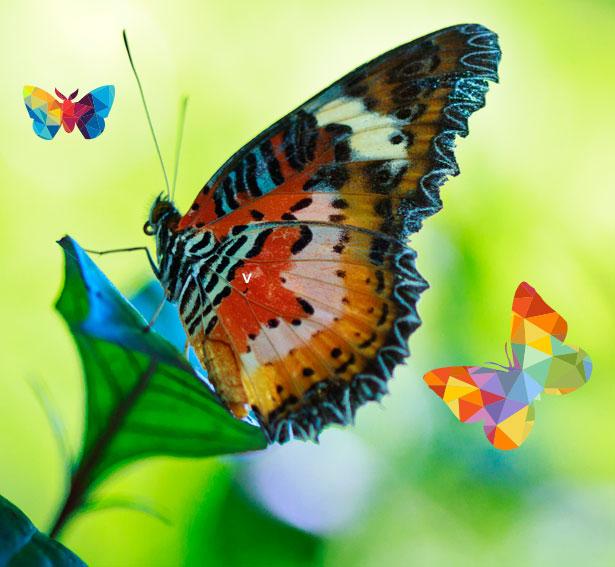 convierte tu dibujo en mariposa