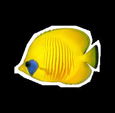 Hello, Aquarium paso 1