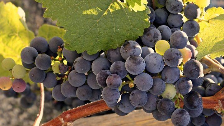 Pole emploi - offre emploi Ouvrier agricole et viticole (H/F) - Saint-Genès-De-Castillon