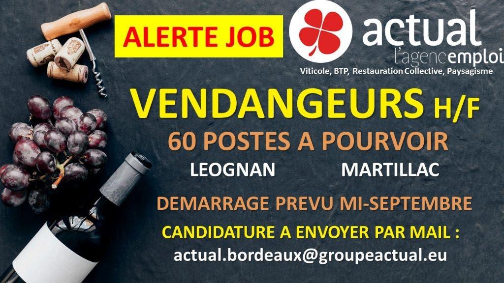 Pole emploi - offre emploi Vendangeurs (H/F) - Bordeaux