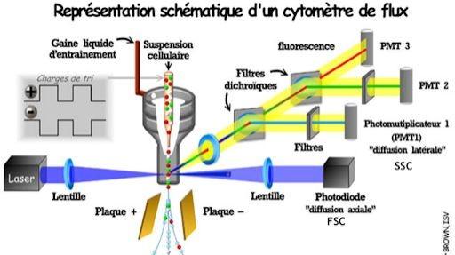Pole emploi - offre emploi Technicien laboratoire (H/F) - Marseille