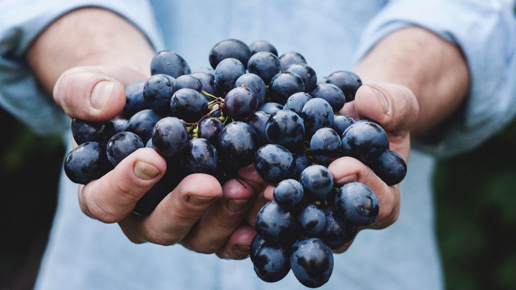 Pole emploi - offre emploi Ouvrier viticole (H/F) - Le Pian-Médoc