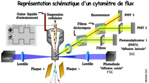 Pole emploi - offre emploi Technicien laboratoire biotechn (H/F) - Marseille