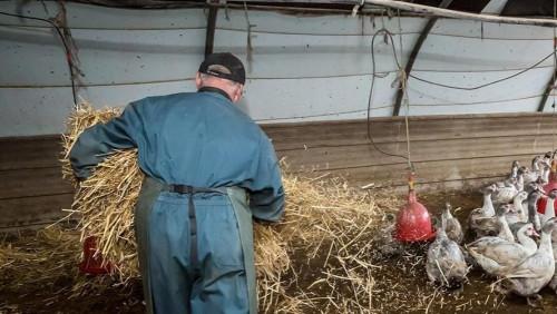 Pole emploi - offre emploi Employé d'élevage (H/F) - Louverné