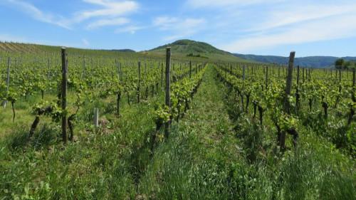 Pole emploi - offre emploi Ouvrier viticole (H/F) - Le Puy-Notre-Dame