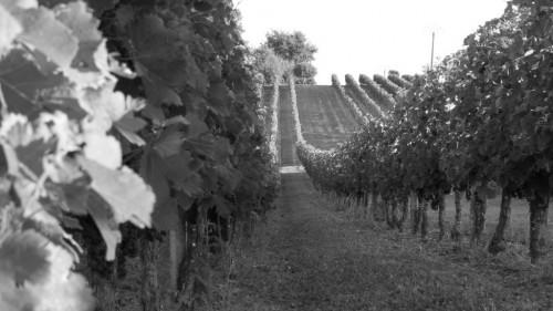 Pole emploi - offre emploi Électromécanicien viniculture (H/F) - Noyers-Sur-Cher