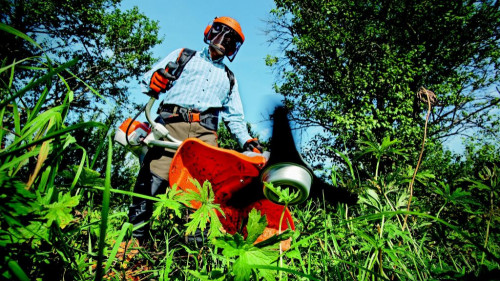 Pole emploi - offre emploi Chef d'équipe paysagiste (H/F) - Noyelles-Godault