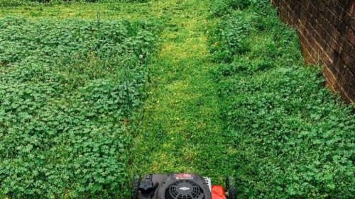 Pole emploi - offre emploi Jardinier (H/F) - Cavaillon