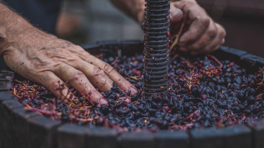 Recherche d'emploi viticole : postulez sans attendre !