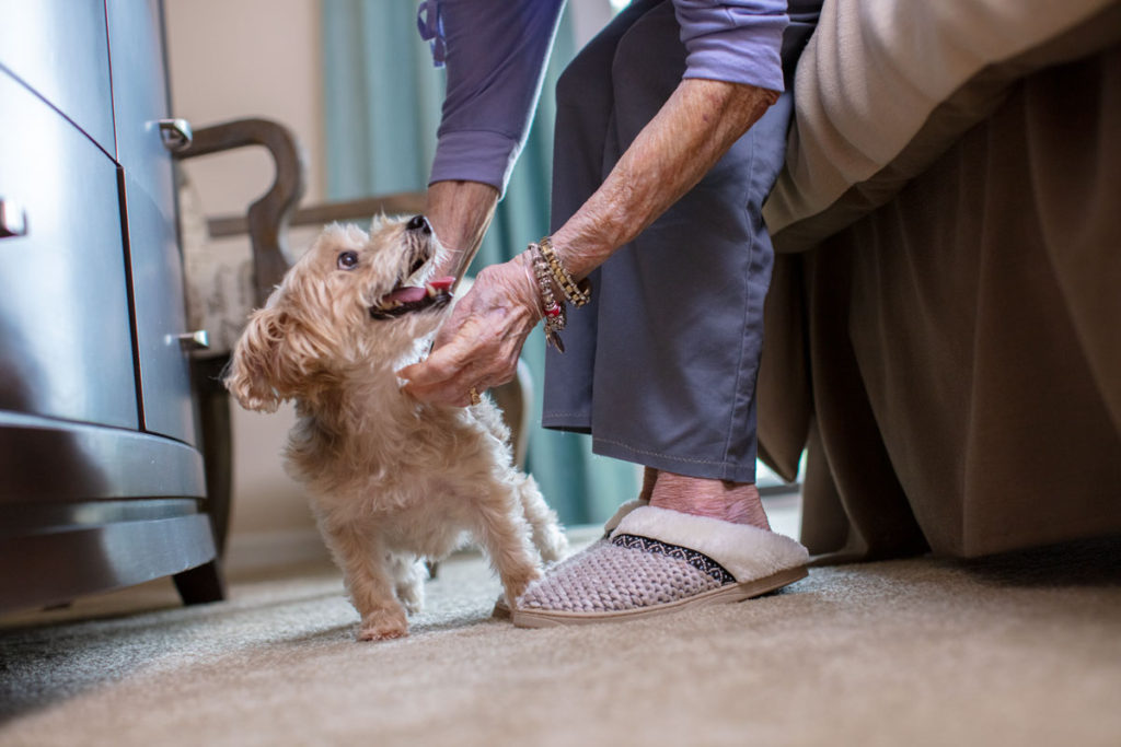 Elderly woman in her senior apartment petting her dog