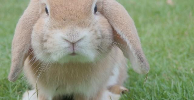 Notre enclos à lapins est trop petit