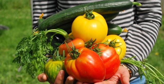 #5 Que pourrais-tu concevoir pour contribuer à la culture des végétaux pour mieux se nourrir?