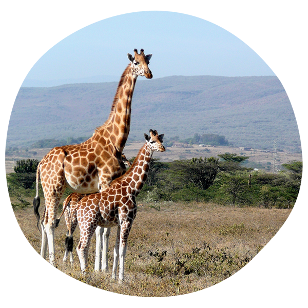 Shipping to Kenya How-to Guide