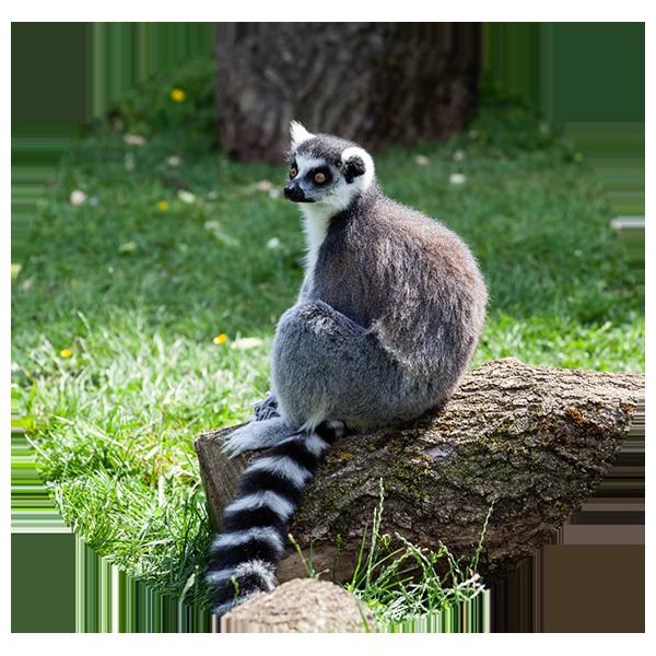 運送至Madagascar指南