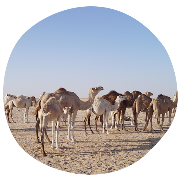 Shipping to Mauritanie How-to Guide