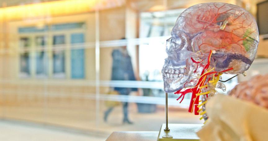 Echo-NHS-Healthcare-Plastic-Model-of-Brain