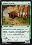 Territorial Boar