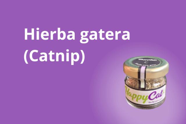 Catnip - Hierba Gatera