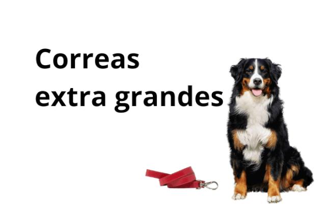 Correa Para Perro Grande y Muy Grande