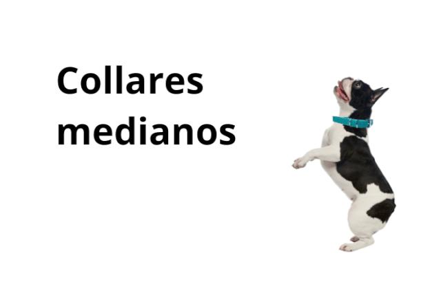 Collares Perro Mediano