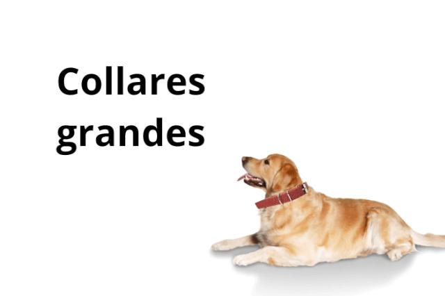 Collar Perro Grande