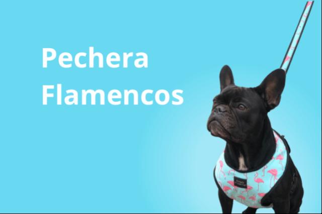 Pecheras y Correas Flamenco