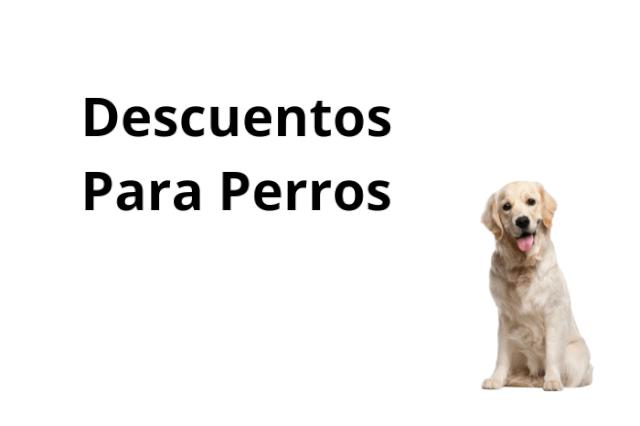 Novedades Para Perros