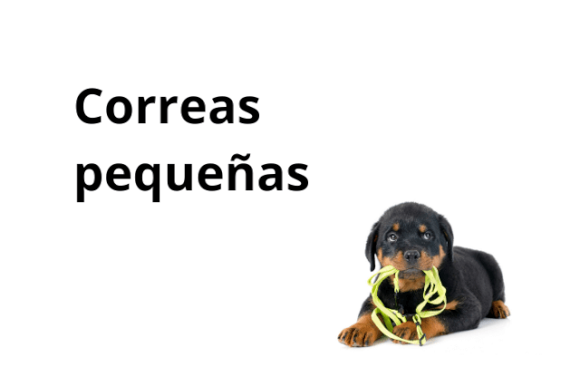 Correa Perro Pequeño y Mediano