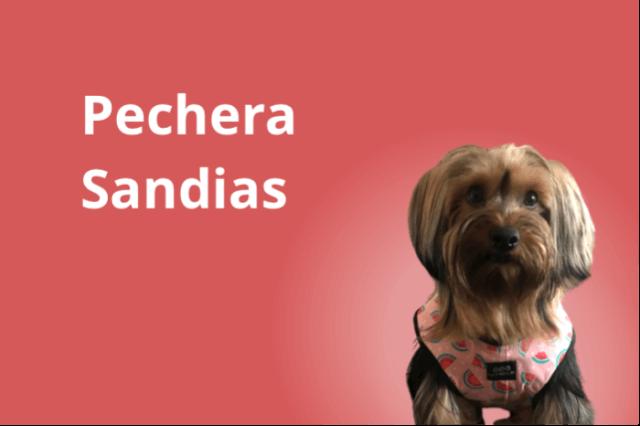 Pechera y Correa Sandia