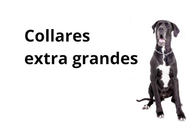 Collar Perro Muy Grande