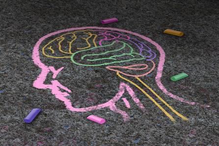 Sidewalk chalk drawing of a brain