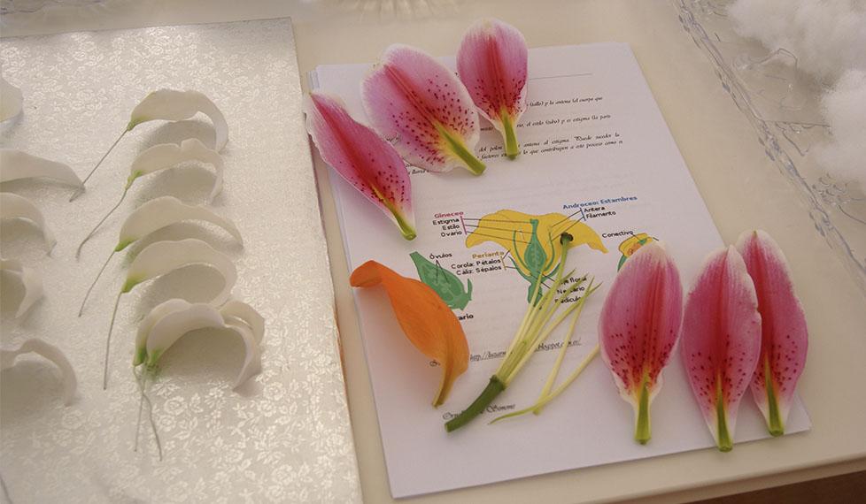 Fundamentos de flores en azúcar
