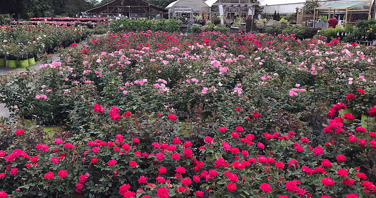 Hyannis Country Garden is a Family Business With Deep Roots