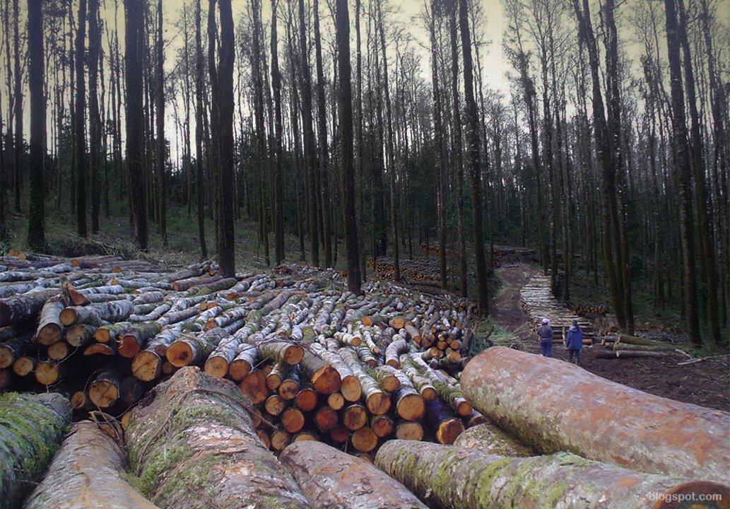La falta de presupuesto no permite garantizar resultados efectivos en la conservación de los bosques nativos.