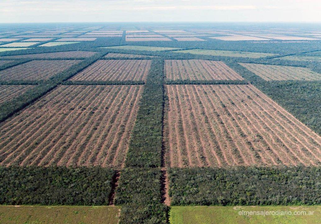 La única respuesta de Peña que aporta novedades es sobre el informe de Bosques Nativos