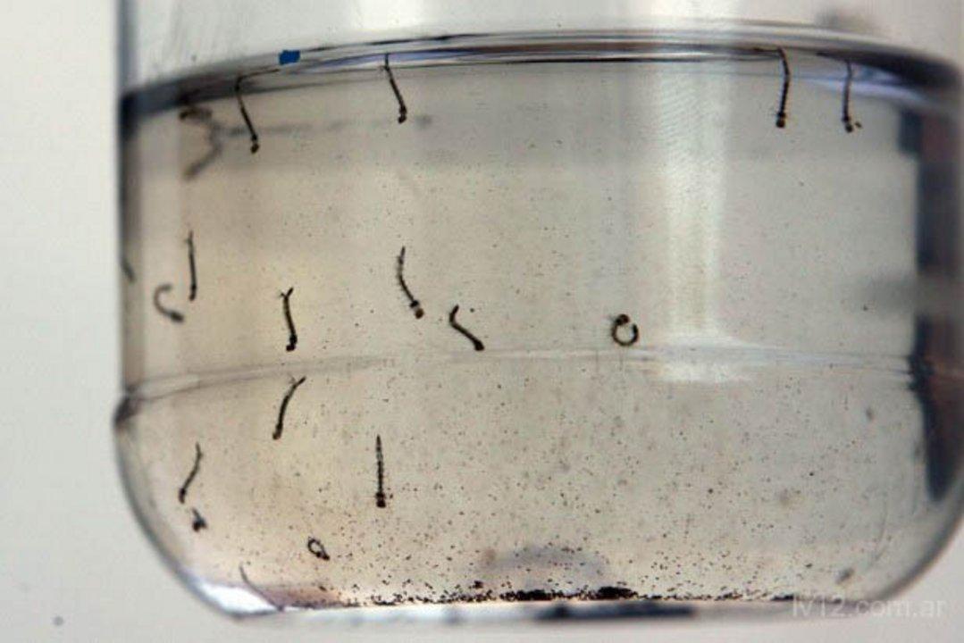 El mosquito del dengue se cría en recipientes con agua acumulada en los alrededores del hogar.