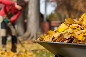 Importance of Fall Clean Ups