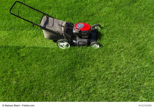 Lawn Care Basics You May Be Forgetting