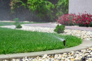 How to Use Less Water in the Summer