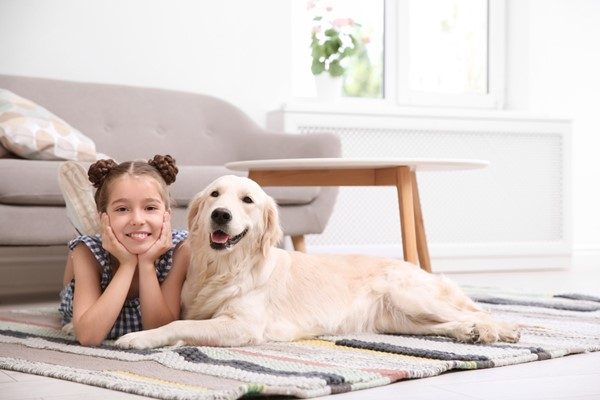 Sharing Your Home with Your Pup