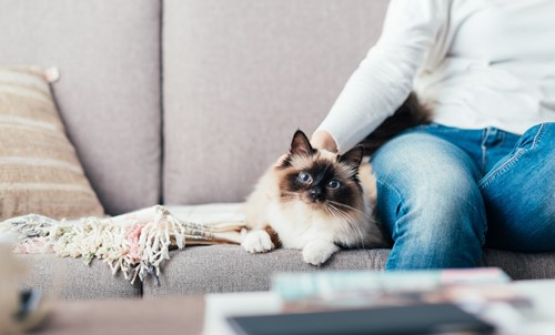 6 Tips To Keep Your Home Clean With A Pet Cat