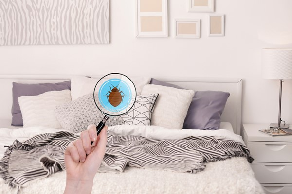 How to Prevent Bedbugs