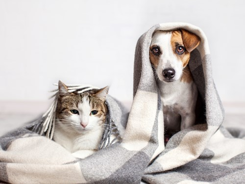 Eliminating Pet Odors Before Selling Your Home