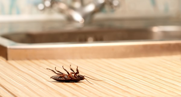 Getting Rid of Cockroaches