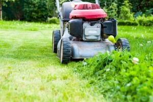 Hidden Reasons to Mow Your Lawn Regularly