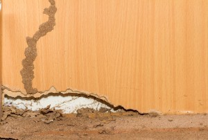 Tips to Keep Your Home Termite Free