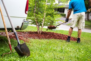 Leave the Landscaping to the Professional