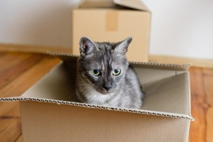 Moving House: Tips for Cat Owners